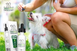 Improve Your Pet's Life With CBD.