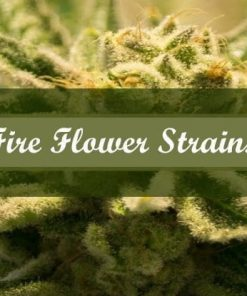 Fire Flower Strains